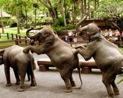 bali Elephant