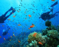 diving-in-tanjung-benoa-of-bali
