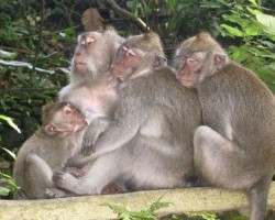 ubud-monkey-forest